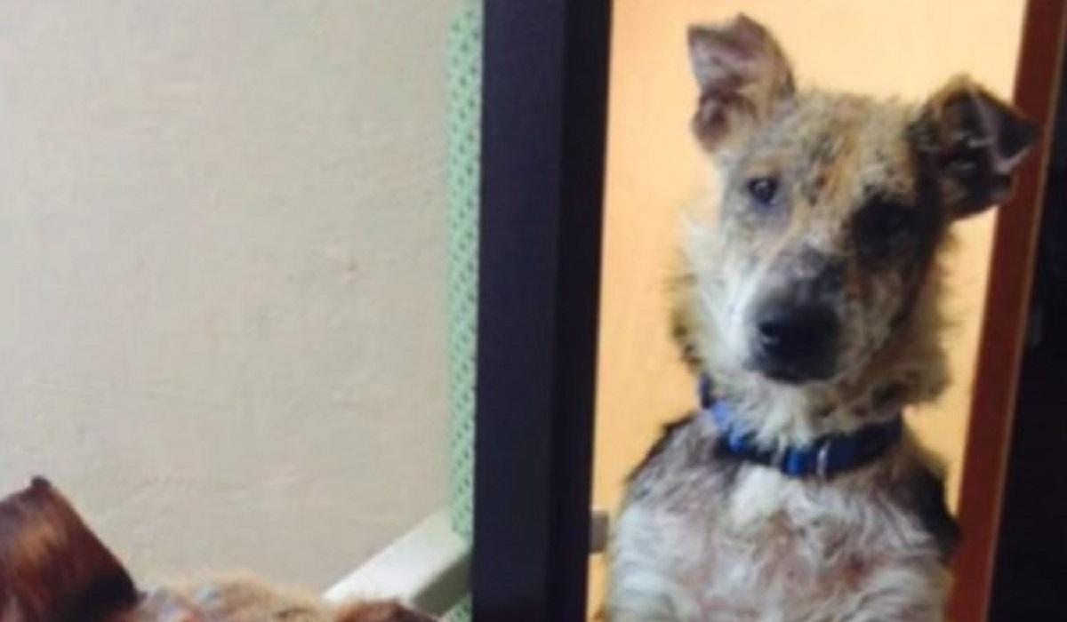 La rinascita di Newman, il cagnolino abbandonato a causa del suo aspetto (FOTO)