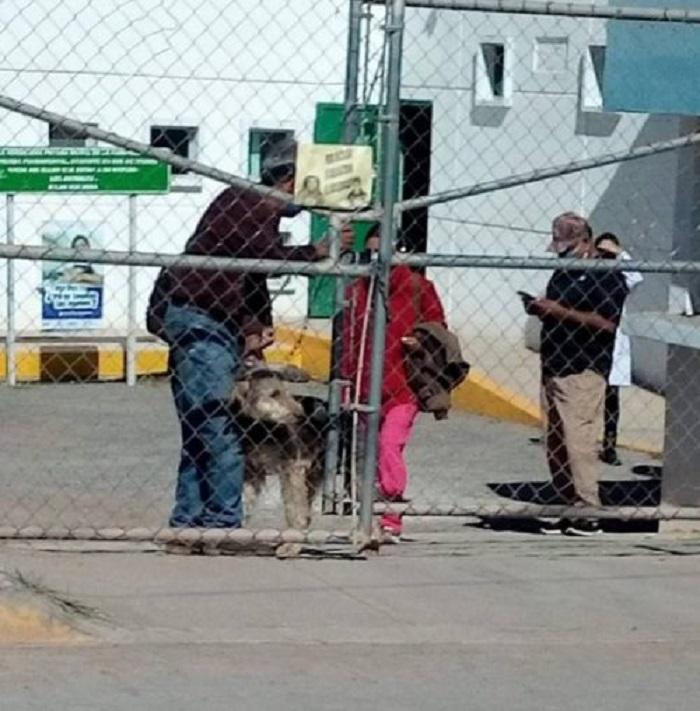 La storia del cagnolino Pierrot, salvato dall'eutanasia grazie ad una campagna solidale (FOTO)