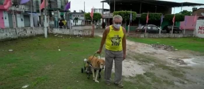 cagnolino passeggino carrello
