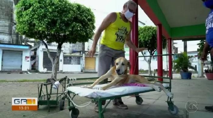 cagnolino aiuto romario