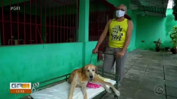 cane disabile foto