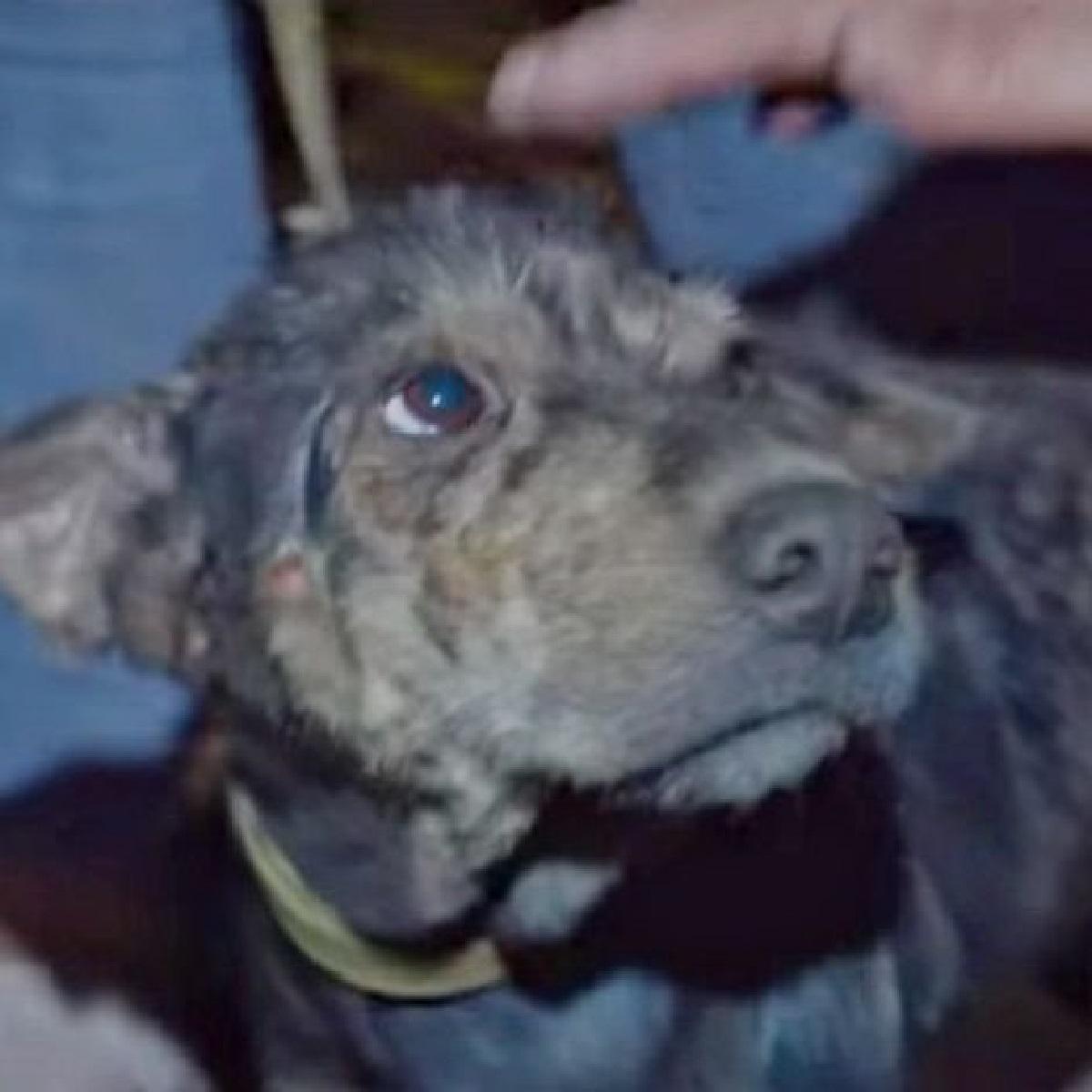 Lada, la cagnolina tenuta prigioniera nel cortile viene salvata (VIDEO)