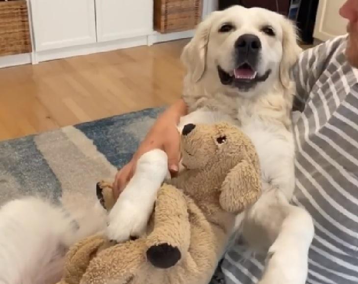 Lady, la cagnolina che non lascia mai il suo pupazzo preferito (VIDEO)