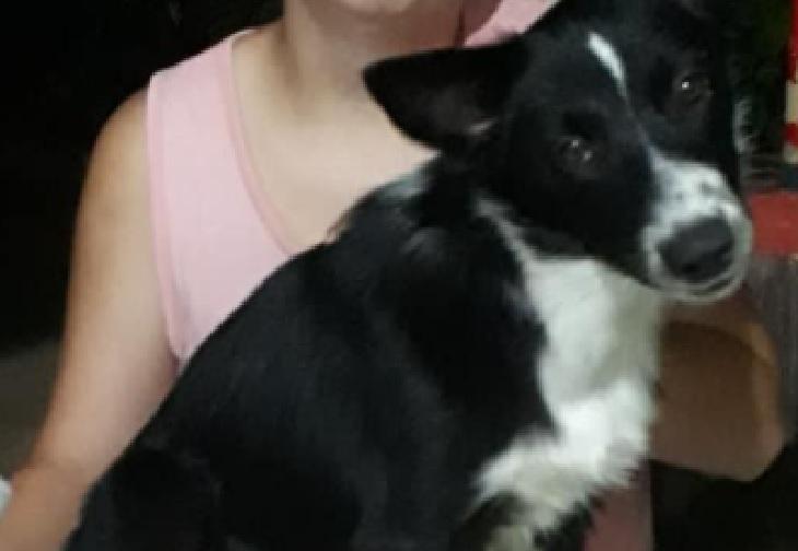 Lassye, la cagnolina che aiuta la proprietaria con il bucato (VIDEO)