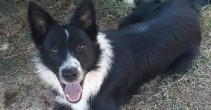lassye cagnolina aiuta proprietaria con bucato