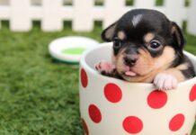 cucciolo di cane dentro tazza