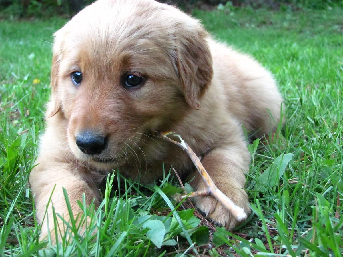 cagnolino sdraiato sull'erba