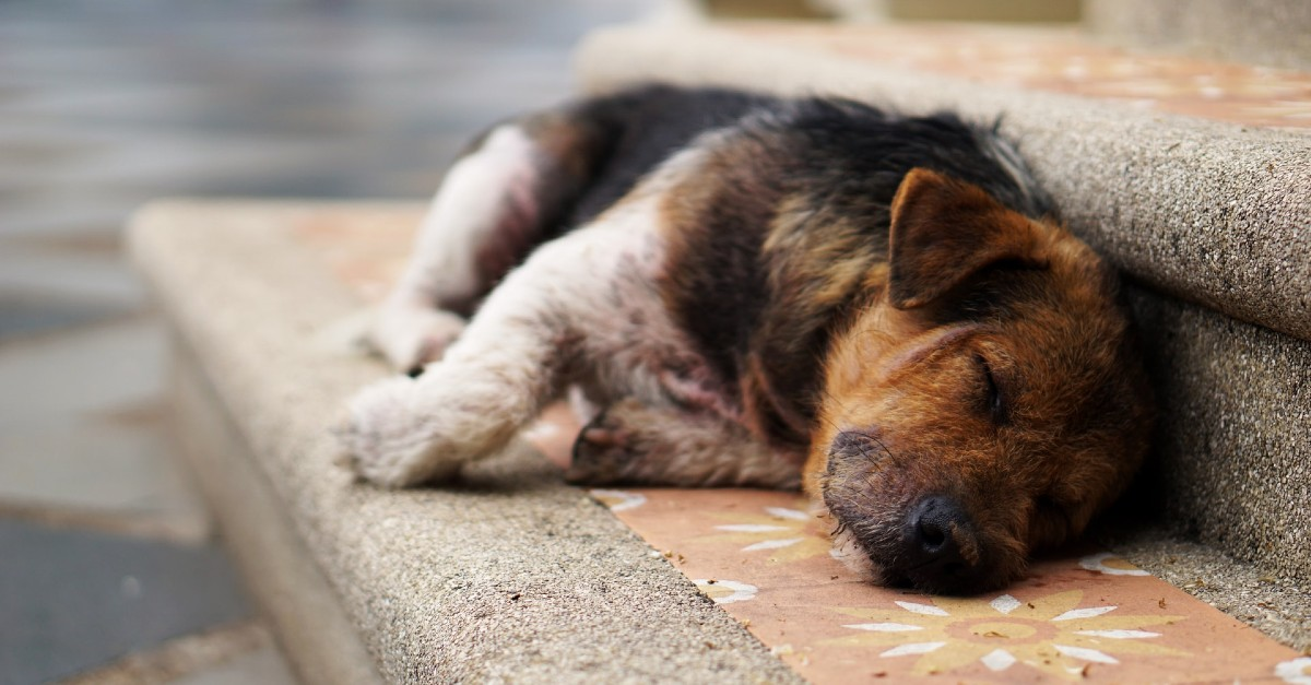Cucciolo di cane investito, come aiutarlo? Nozioni di primo soccorso e come muoversi