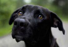 nerino cucciolo salvataggio