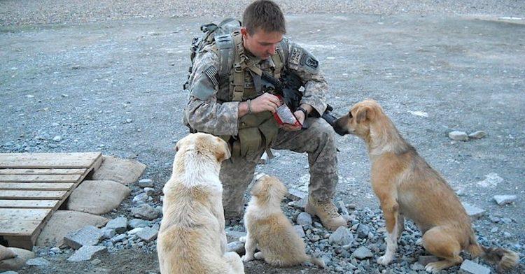 L'emozionante storia di tre cagnolini che hanno salvato un soldato (VIDEO)