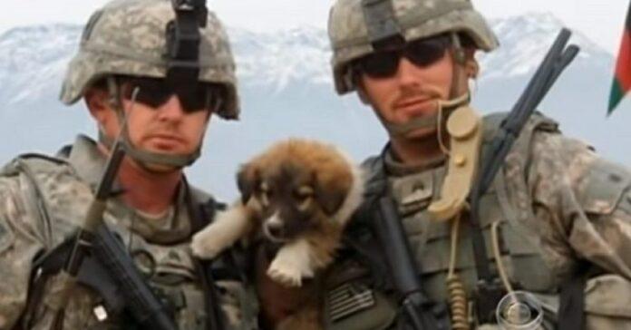 tre cagnolini soldati