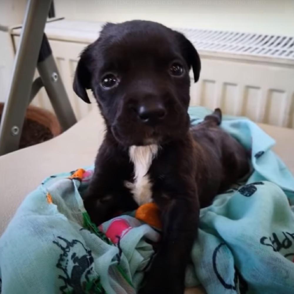 Lora, la cucciola sordocieca salvata da un destino terribile (VIDEO)