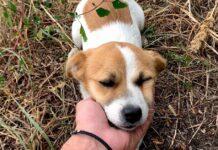 lucy cucciola salvata prima di tempesta