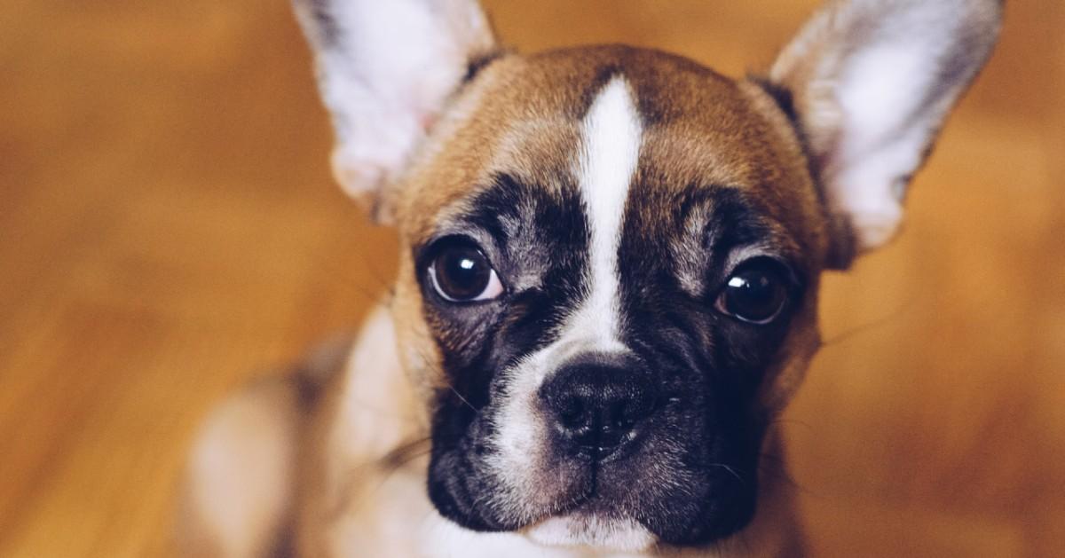 il cagnolino vuole più attenzioni