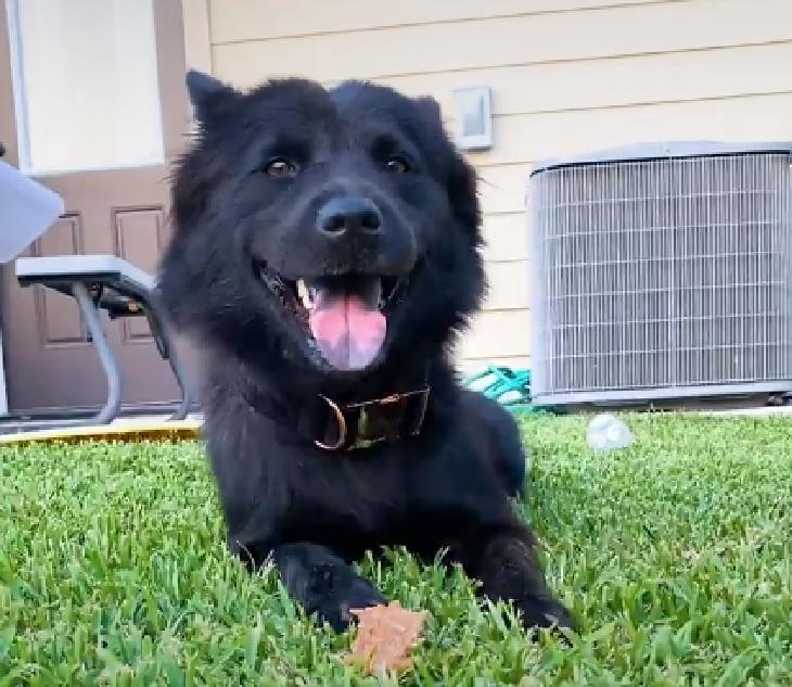 luna cagnolina visita veterinaria microchip