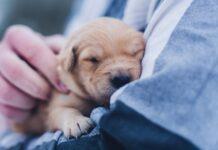 come scegliere un cucciolo di cane