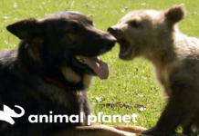cane nero e orsetto giocano insieme