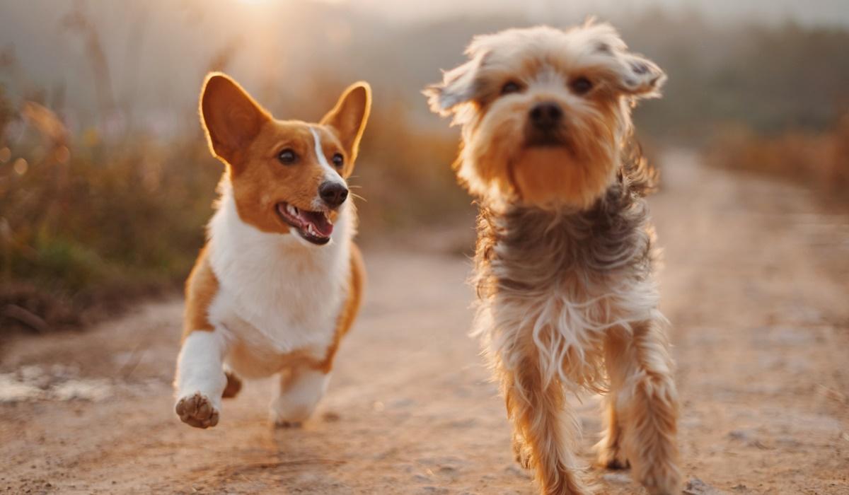 Memoria di razza del cane: che cos'è e come la si può sfruttare