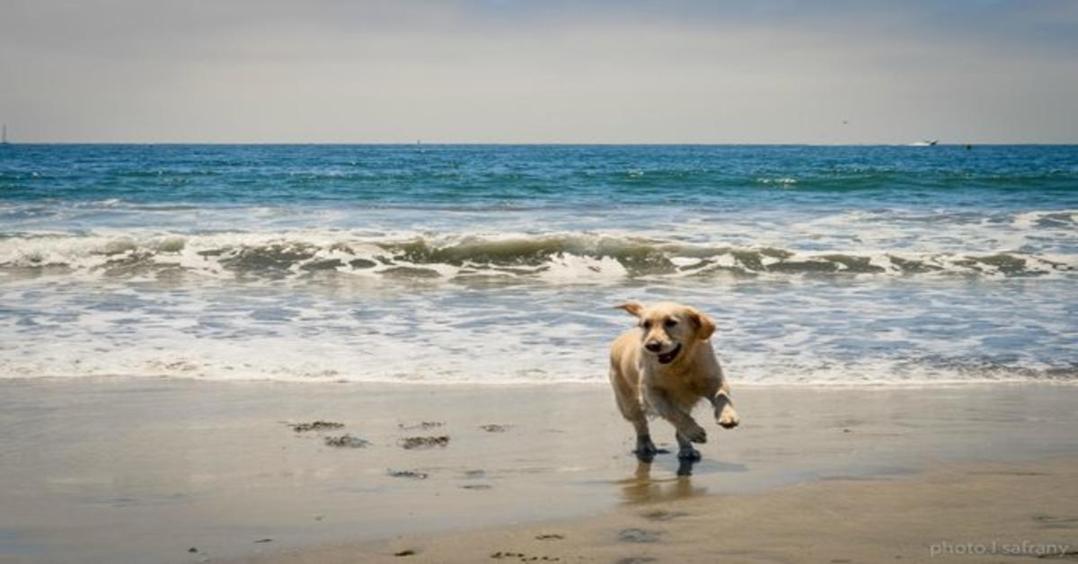 Il cane ama la spiaggia e non vuole tornare a casa (VIDEO)