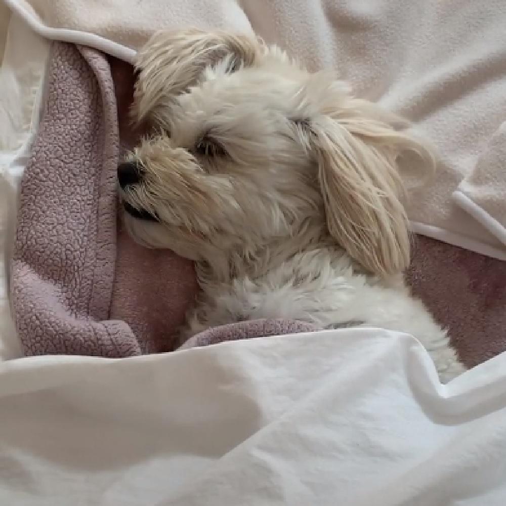 Pani, la cagnolina arrivata dall'Iran viene adottata (VIDEO)