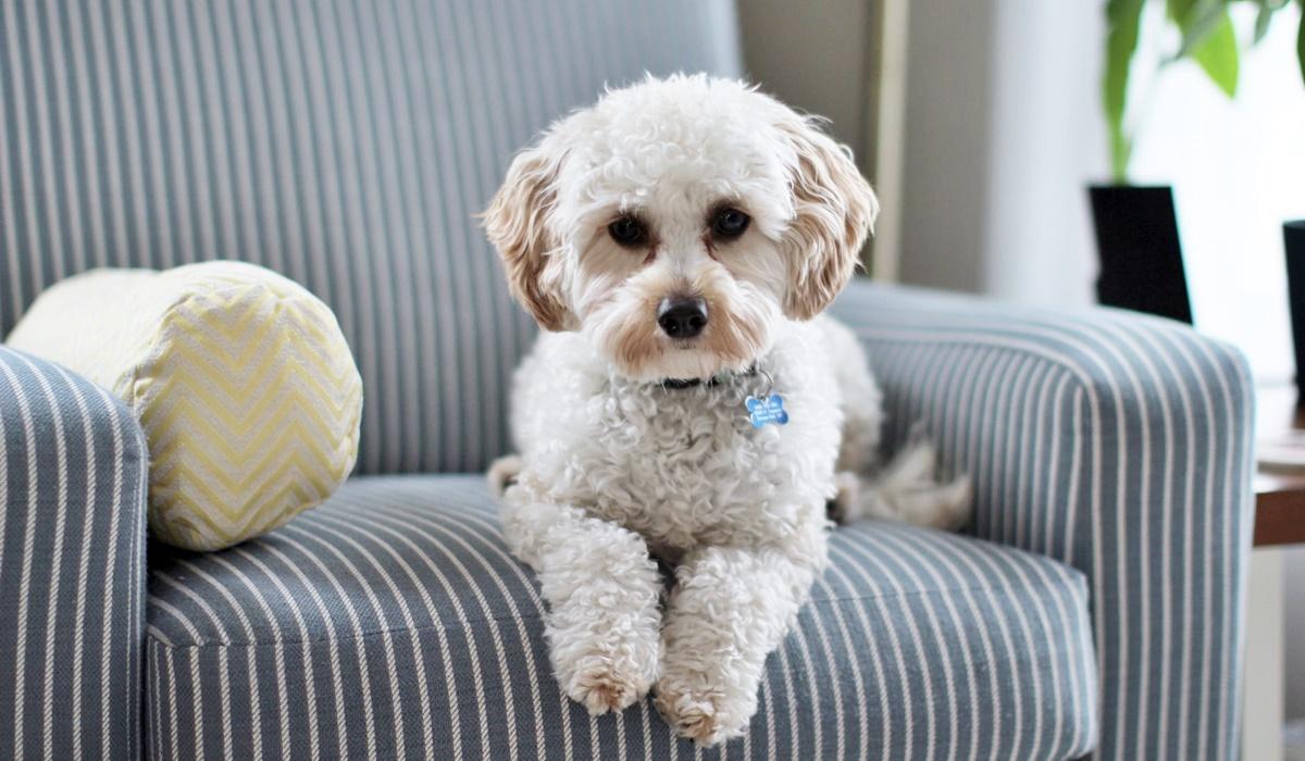 Passaggio di proprietà del cane: in cosa consiste e quando deve essere fatto