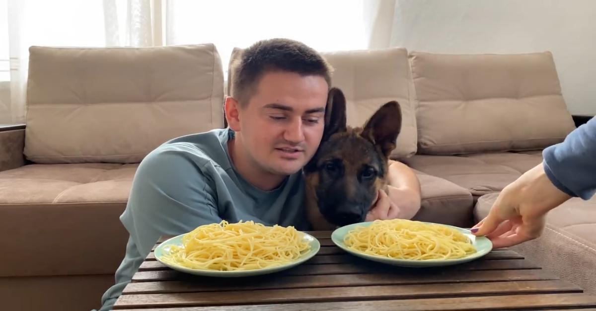 Questo cucciolo di Pastore tedesco compete con il padrone (VIDEO)