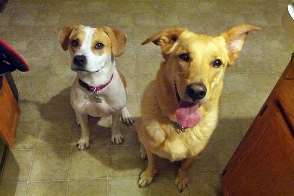 cani che vivono insieme