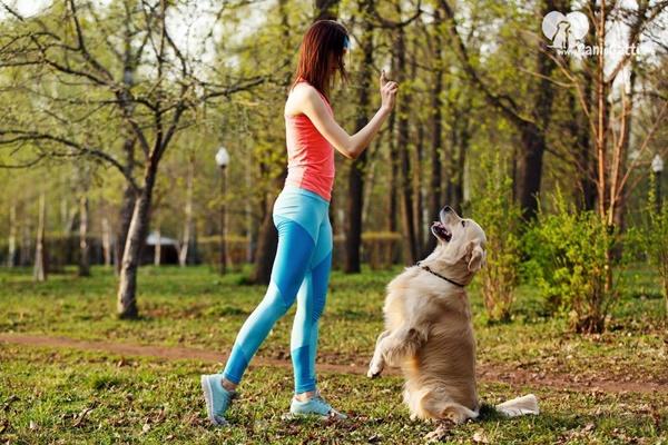 addestrare un cane adulto