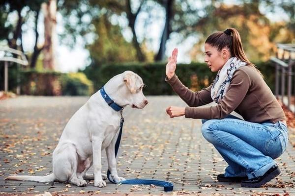 addestrare il cane ai comandi base