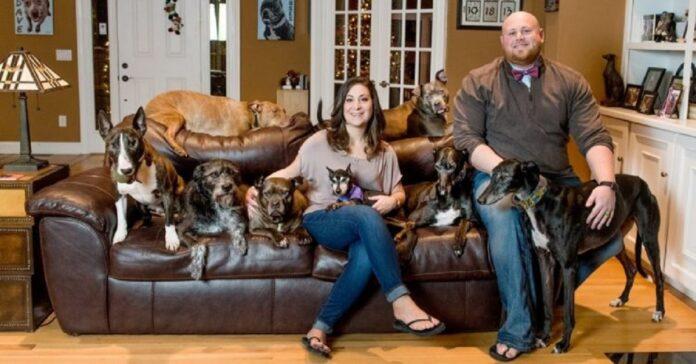 per far vivere meglio 20 cani spendono 55 mila dollari