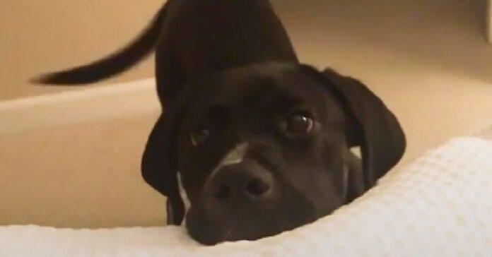 pito cucciolo salvato strada amore