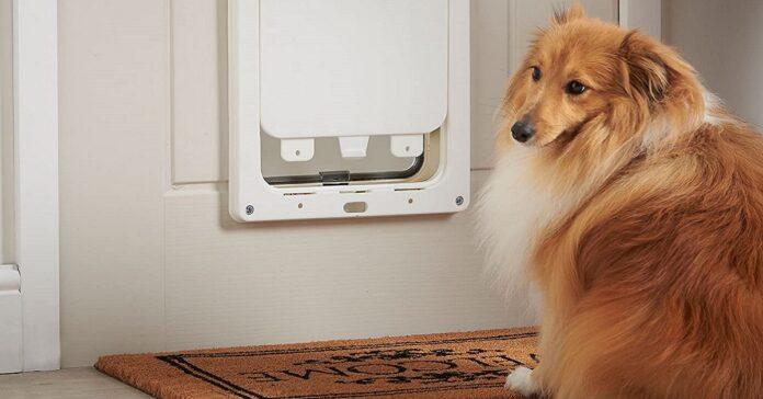 porticina di ingresso per il cane
