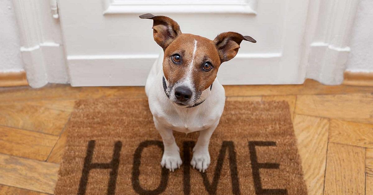 Porticina per il cane: dove metterla e come insegnare a Fido ad usarla