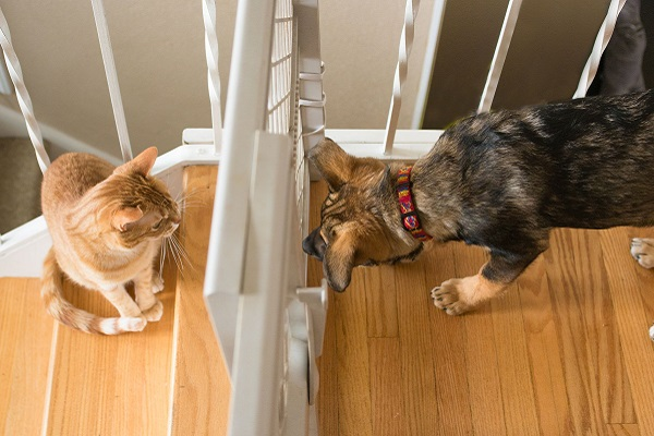 cagnolino e gattino si presentano