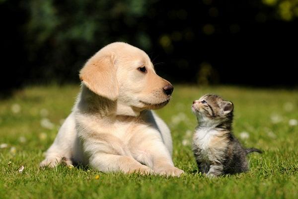 due cuccioli su un prato