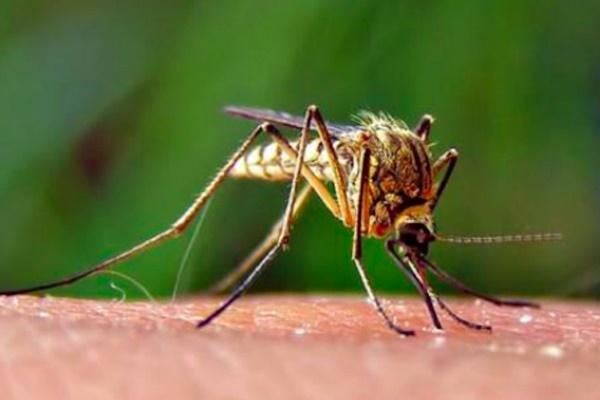 Proteggere il cane dalle zanzare: tutti i rimedi, compresi quelli fai da te