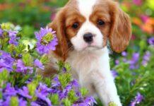 cucciolo di cane in mezzo ai fiori
