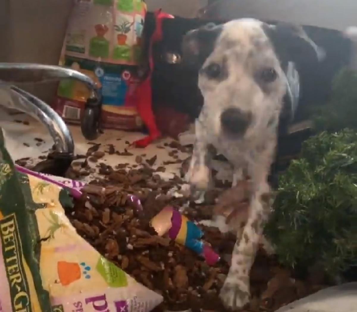 Rebel, la cucciola che ha sempre voglia di giocare (VIDEO)