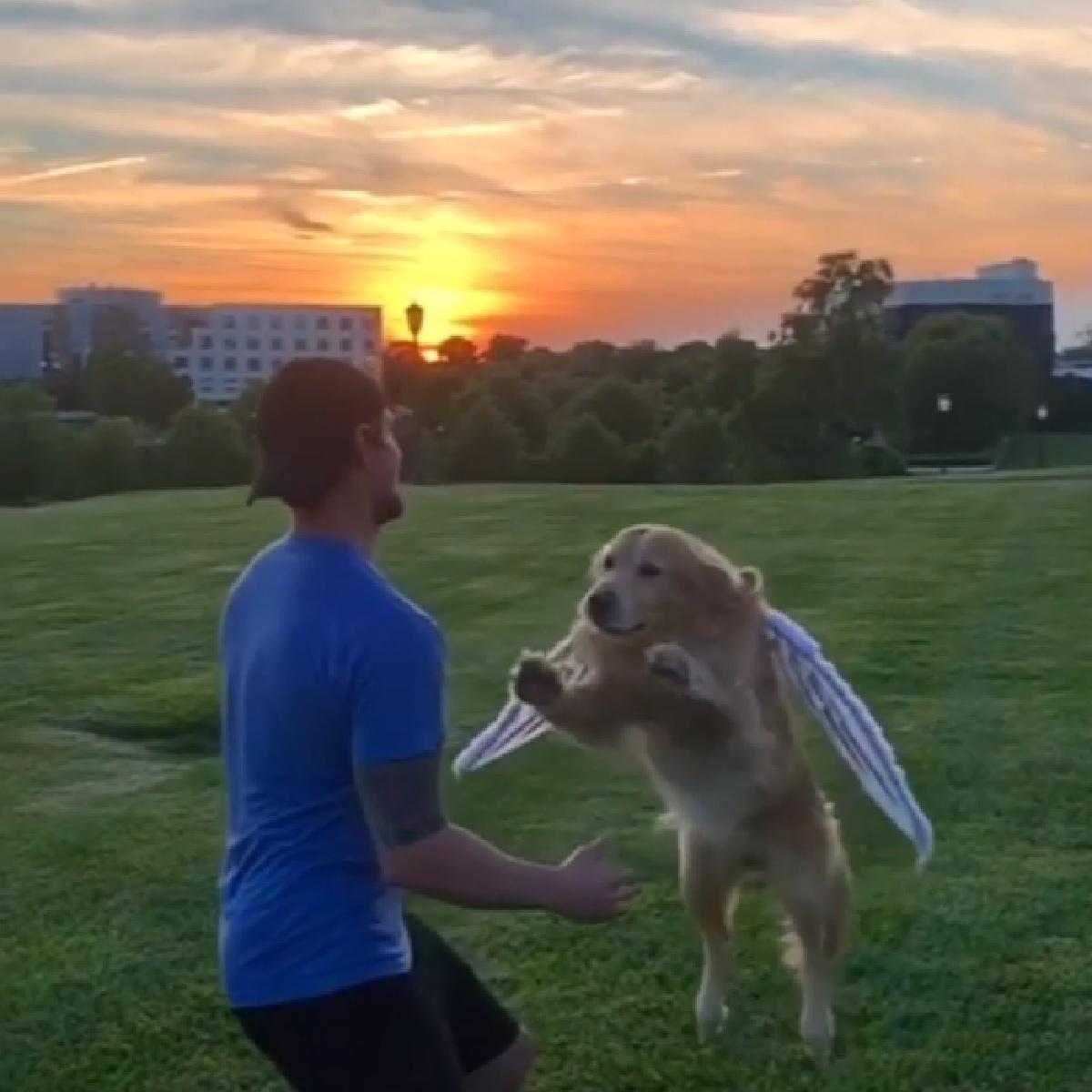 Riley, il Golden Retriever salta sempre fra le braccia del papà (VIDEO)