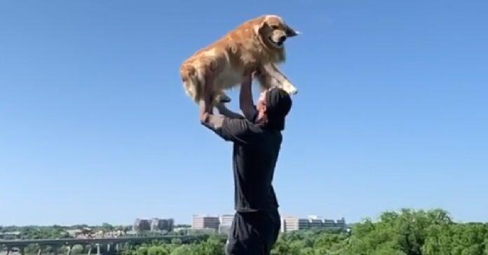 riley golden retrieve salta sempre braccia papà