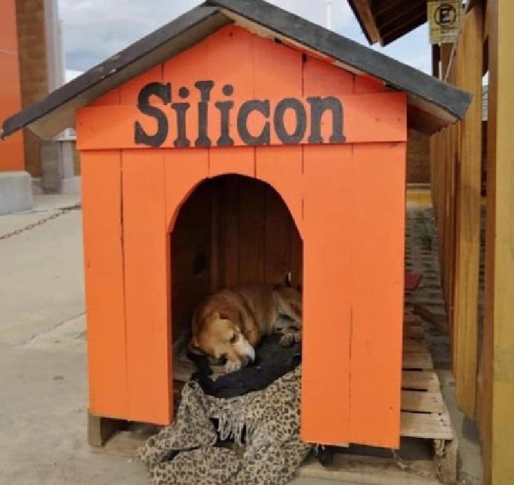 Silicon, il cane randagio che conquista tutti sul posto di lavoro (FOTO)