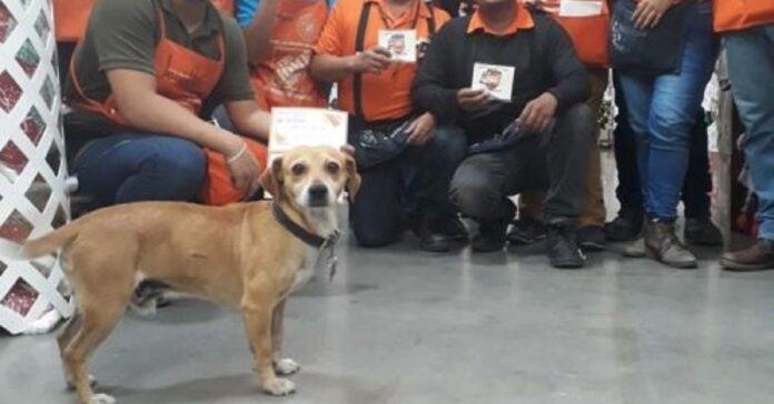 silicon cane randagio conquista tutti sul posto di lavoro