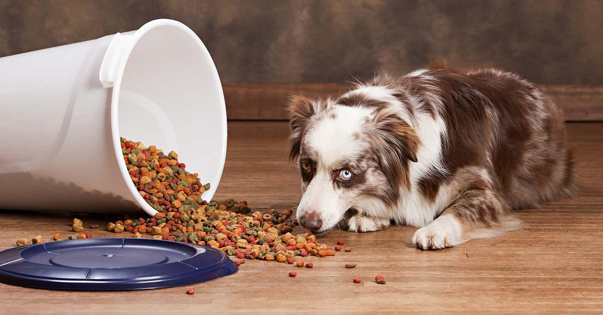 Supersemi per i cani: quali sono quelli che possono dare loro più benefici
