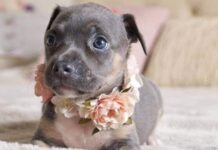 tequila cucciola e suo servizio foto per adozione