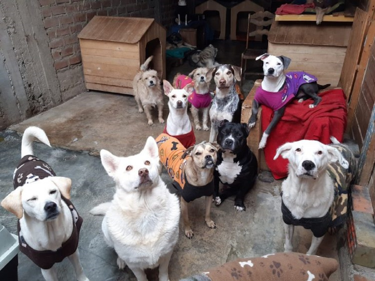tequila cani rifugio servizio fotografico