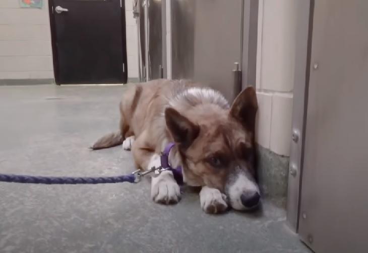 tobi cagnolino abbandono paura