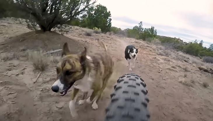 tobi cane clara sorella gioco