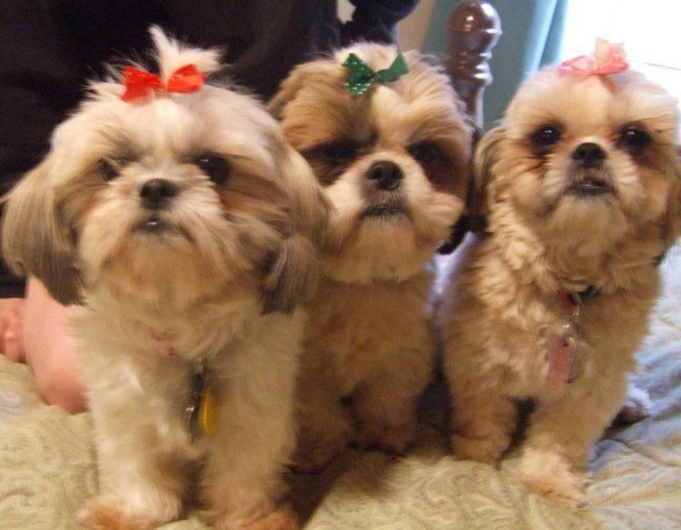 trio cani giocare