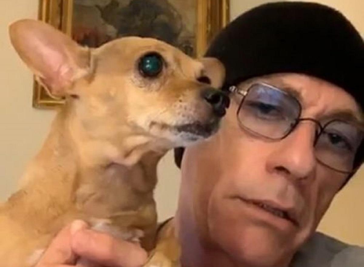 cucciolo cagnolino attore