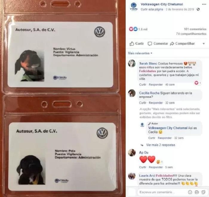 badge assunti cani